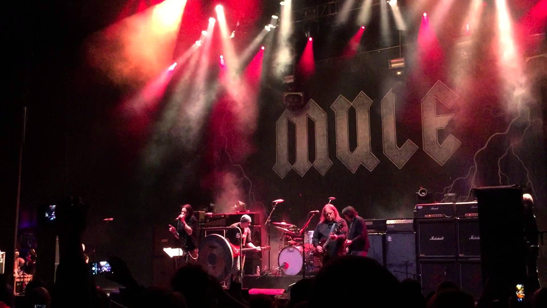 mule-nye-09